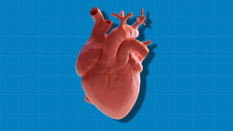 Lab-Grown Mini-Heart Beats like a 25-Day-Old Human Embryo's Heart