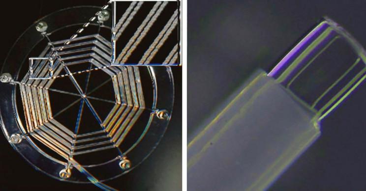 Ionic Spiderweb Could Revolutionize Nascent Field of Soft Robotics