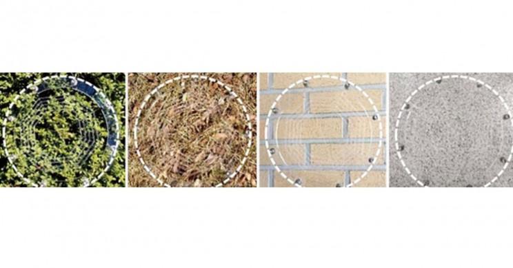 Ionic Spiderweb Various Fields