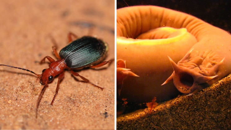 11 of the Greatest Defense Mechanisms in Nature