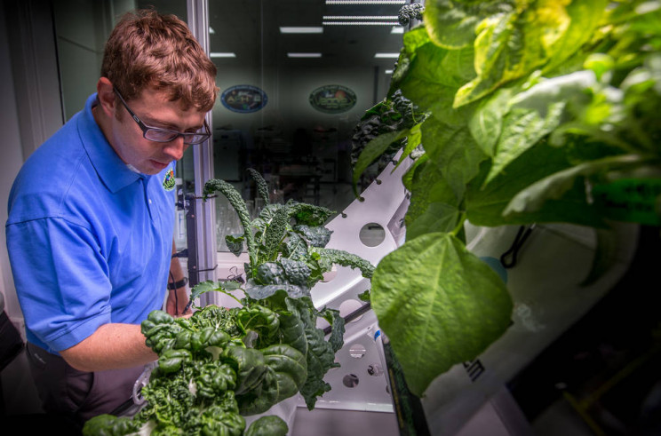 A Little Spice Added in Space: NASA to Grow Its First Fruit Plant Aboard the ISS