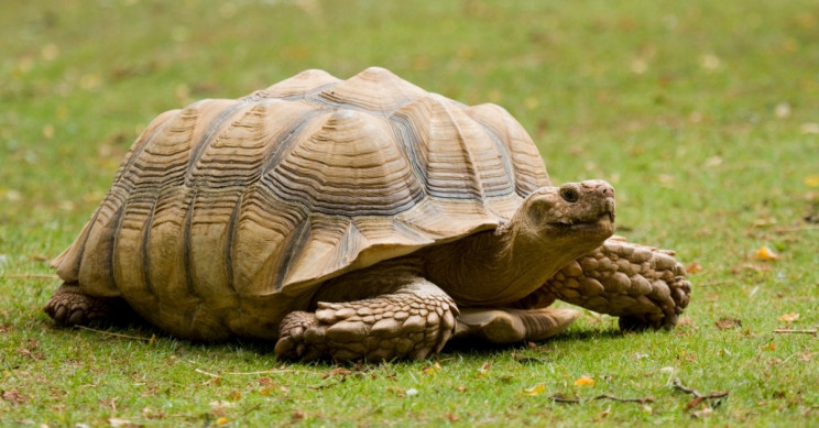 Gigantic Land Tortoises Aren't as Stupid as You May Think