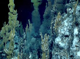 Explorer Breaks Record for Deepest Dive Ever by Reaching Bottom of the Mariana Trench
