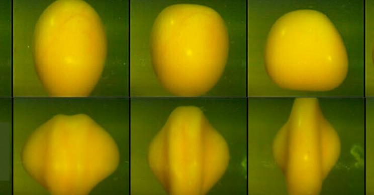 Team Spins Egg Yolks to Study Effects of Brain Trauma
