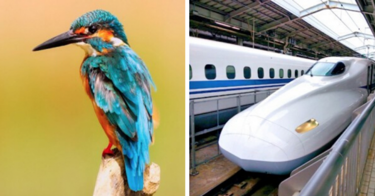Biomimicry: 9 Ways Engineers Have Been 'Inspired' by Nature