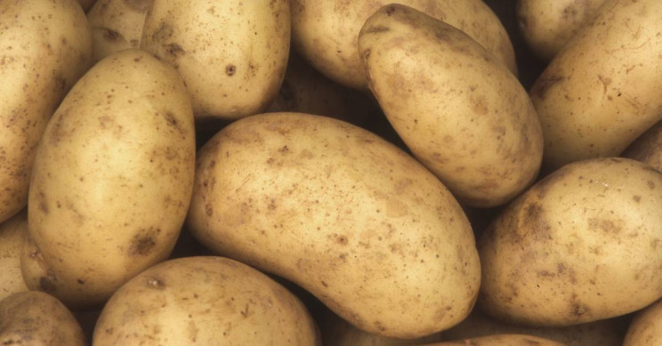 Eating Potato Puree Just as Effective as Carbohydrate Gels for Boosting Athletic Performance