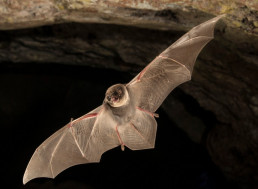 Genetic Similarities Uncovered between Species That Use Echolocation