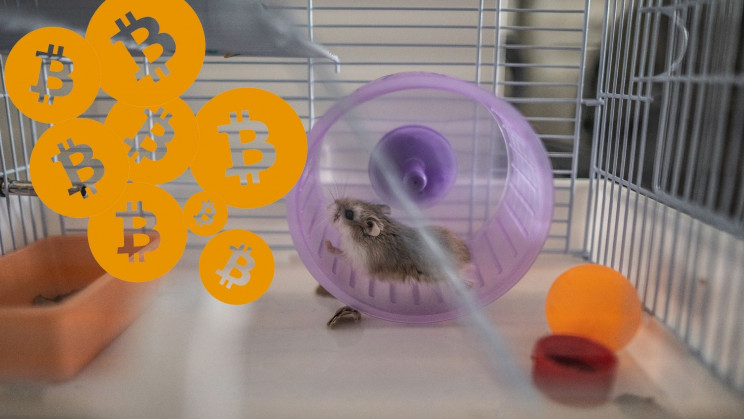 A Hamster in a Cage Trading Crypto Outperforms S&P 500 and Bitcoin