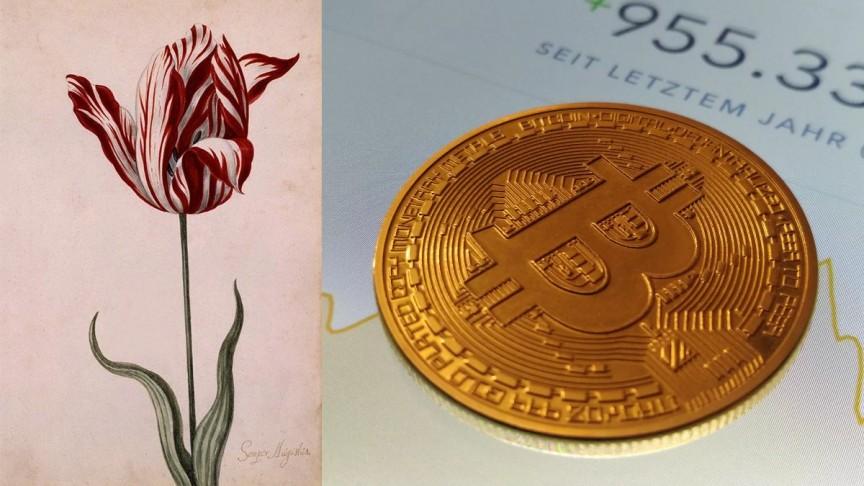 cryptocurrency tulip mania