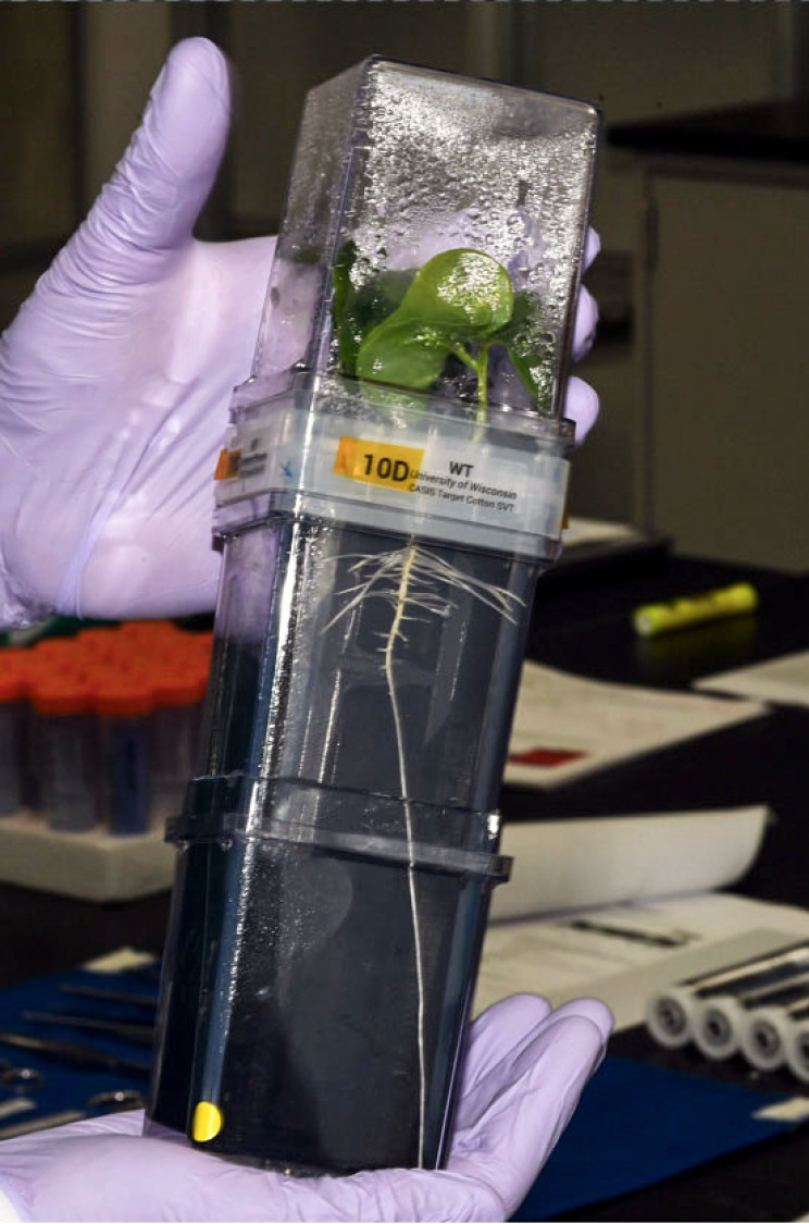 Water Bears and Squid Will Hitch a Ride to the ISS