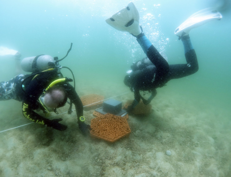 Eco-Friendly 3D-Printed Reefs to Rescue Hong Kong's Corals