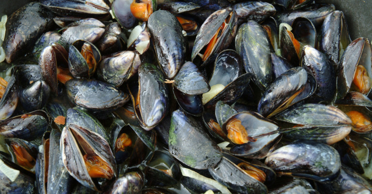 "Thousands of Mussels Have Been Found ""Cooked"" to Death on a Beach in New Zealand"