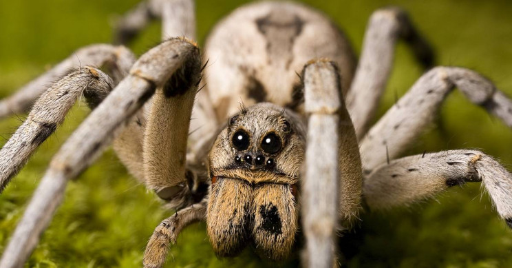 Climate Change Is Causing a Spider Baby Boom in the Arctic