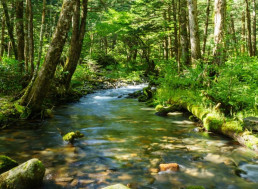 Shinrin-Yoku: The Japanese Practice of Forest Bathing