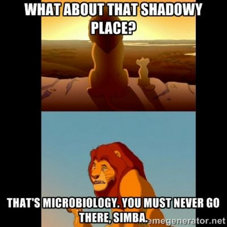 lab memes lion king microbiology