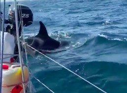 Orcas Attacking Ships in Spain Leave Scientists Baffled