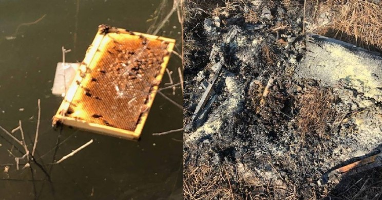 Half a Million Bees in Texas Killed After Someone Set Fire to Them