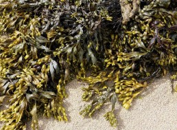 Seaweed - the Modern Day Superfood That Got Everyone Talking