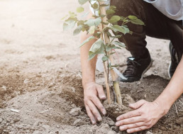 The Tree-Planting Campaign Supported by Elon Musk Just Raised $20 Million