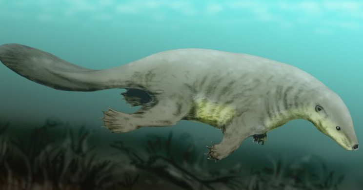 A Jurassic Mammal-like Fossil Is Changing Our Understanding of Hyoid Bone Evolution