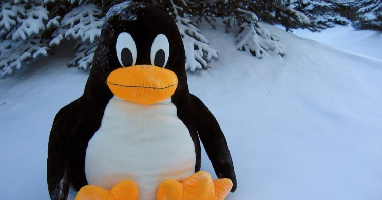 Here Is Why Linux Is a Good Choice of OS for Software Developers