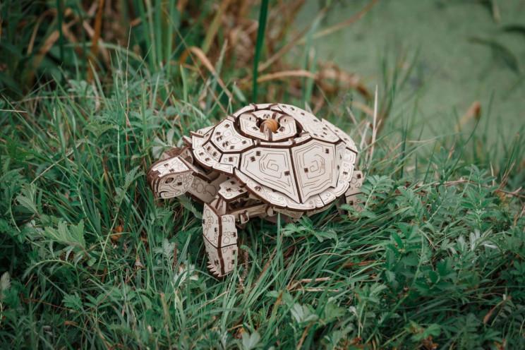 ewa tortoise