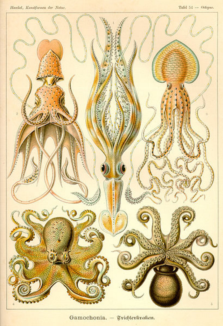 19 Beautifully Intricate Illustrations by German Naturalist Ernst Haeckel