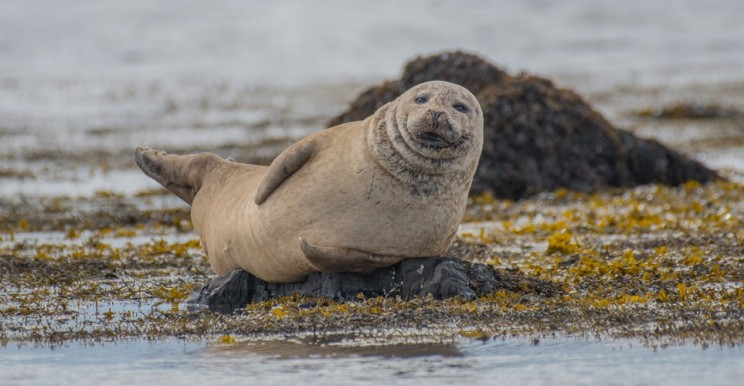 A Seal Singing the Star Wars Theme Song Goes Viral