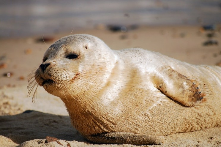 Image result for a seal