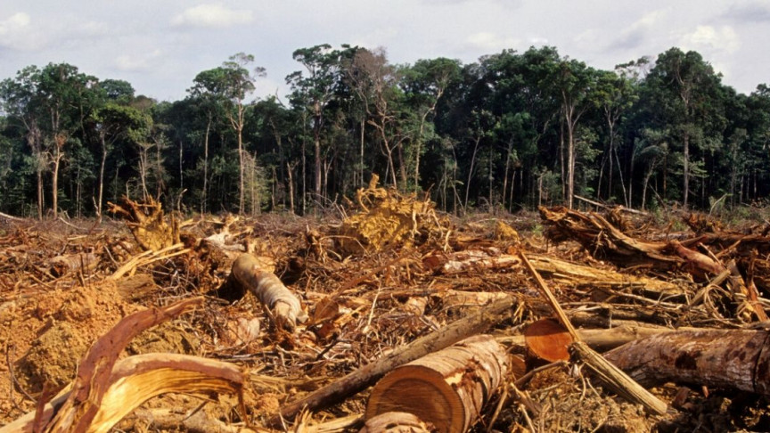 Largely Deforested Section of the Amazon Is Releasing More CO2 Than It's Absorbing - Interesting Engineering