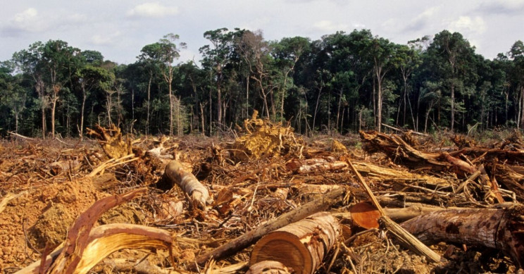 Largely Deforested Section of the Amazon Is Releasing More CO2 Than It's Absorbing