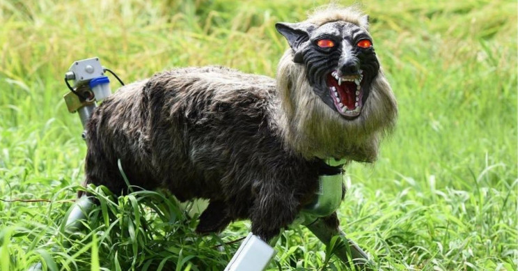 Japanese Town Sets Monster Wolf Robot to Keep Bears Away