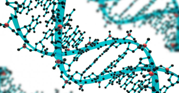 Everything You Need to Know About Genome Editing
