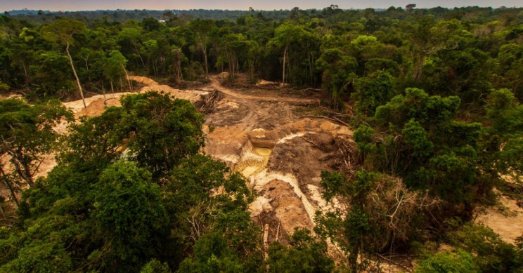 Amazon Rainforest Will Be Decimated by 2064, Professor Claims