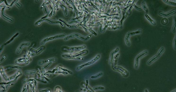 Climate Change Pathogen