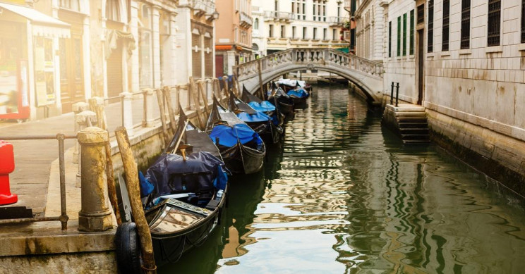 No, Dolphins Have Not Returned to Venice Due to the Coronavirus Quarantines