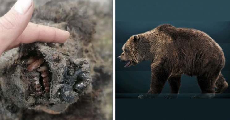 Hunters Discovered the First Naturally Mummified Cave Bear