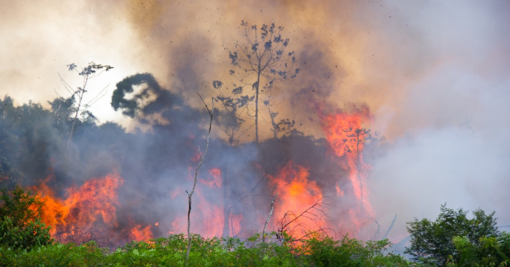 Respiratory Issues Rise in Brazil, May Be Linked to the Amazon Forest Fires