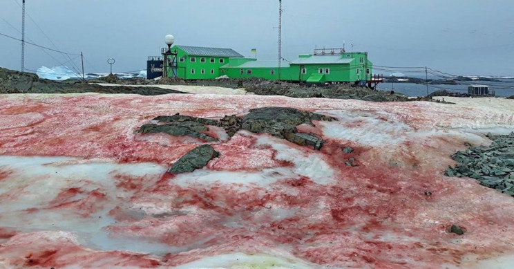 Scientists Woke up to Shocking Sights of Blood Red Ice in Antarctica