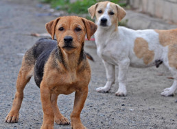 The Latest Coronavirus Threat May Come From Dogs