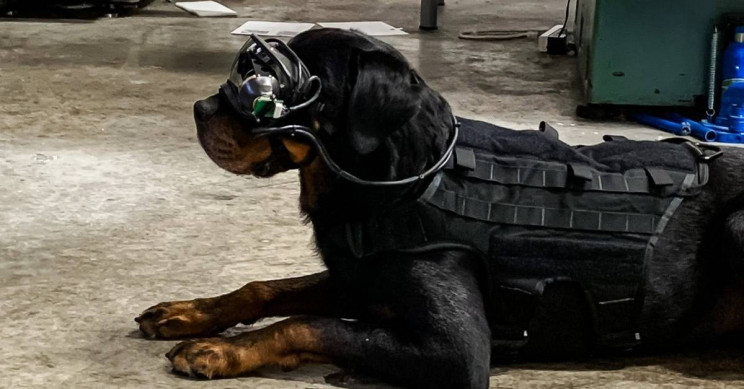 U.S. Military Dogs Will Now Wear AR Goggles on Missions