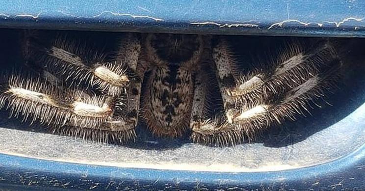 Huge Spider Lurking In Car Door Handle Stuns Internet