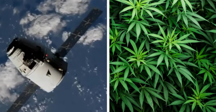 SpaceX Will Carry Cannabis to the ISS in Its 20th Trip