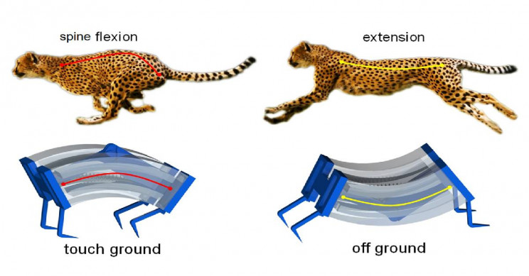 Novel Soft Robots With Flexible Spines Can Run as Fast as Cheetahs