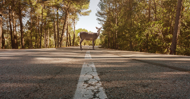 New AI System in Estonia Reduces Speed Limit for Crossing Animals