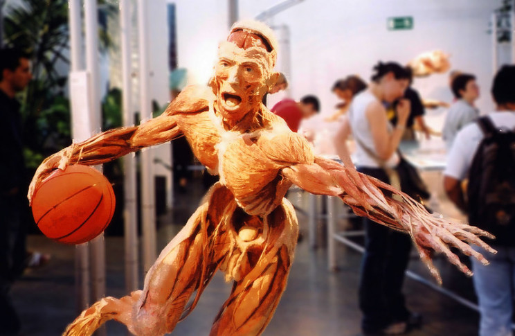 unusual body preservation plastination