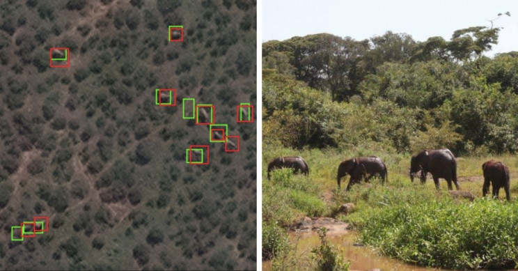 Scientists Use Satellite Imagery to Count Elephants