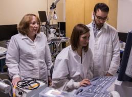 Best Biomedical Engineering Schools Worldwide