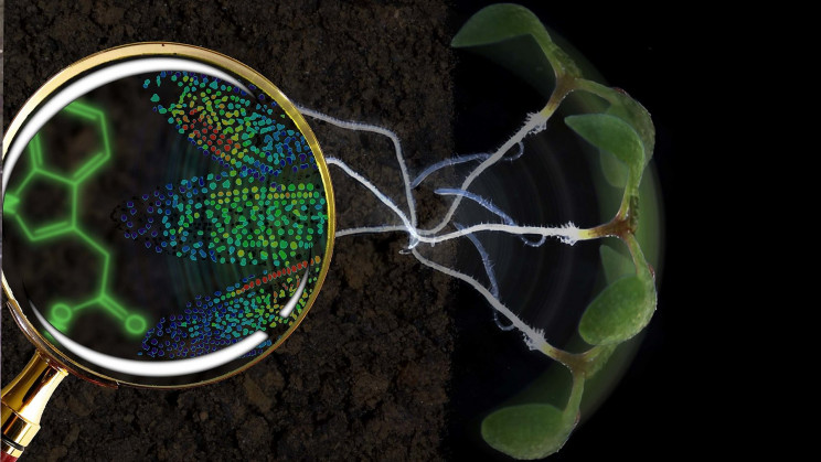 New Biosensor Lets Us See Life as Never Before