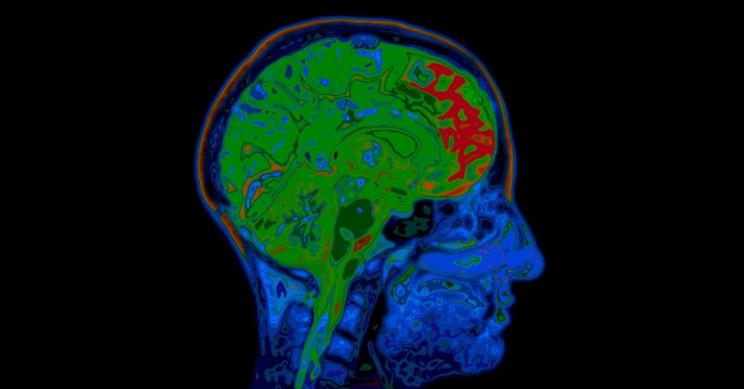 Individual Neurons Help Us Make Memory-Based Decisions, Says Study